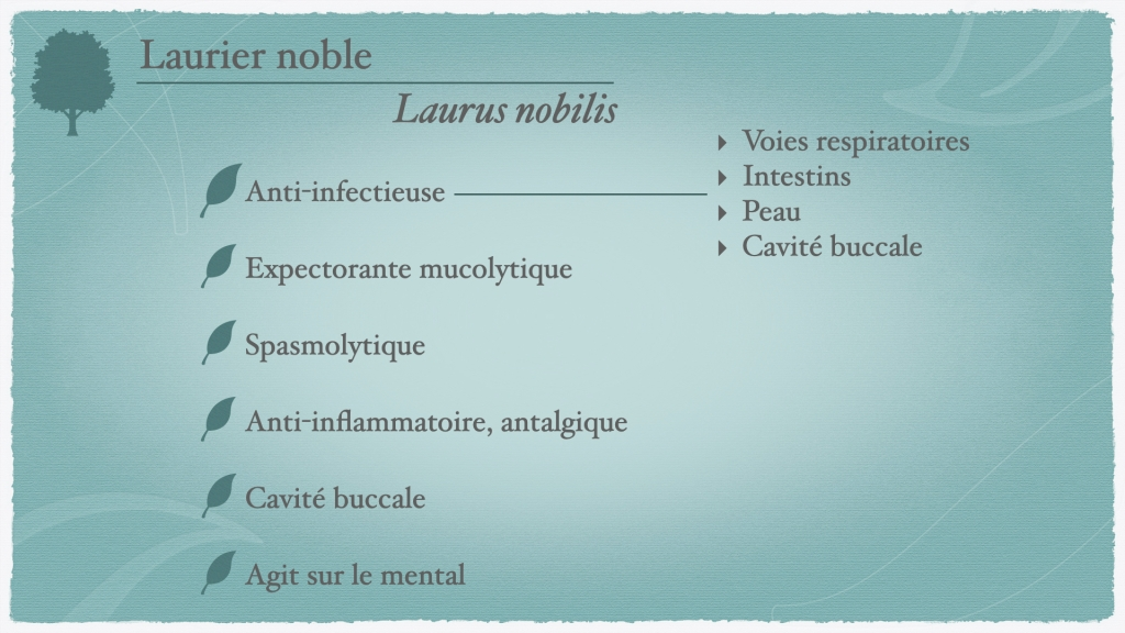propriétés du laurier noble